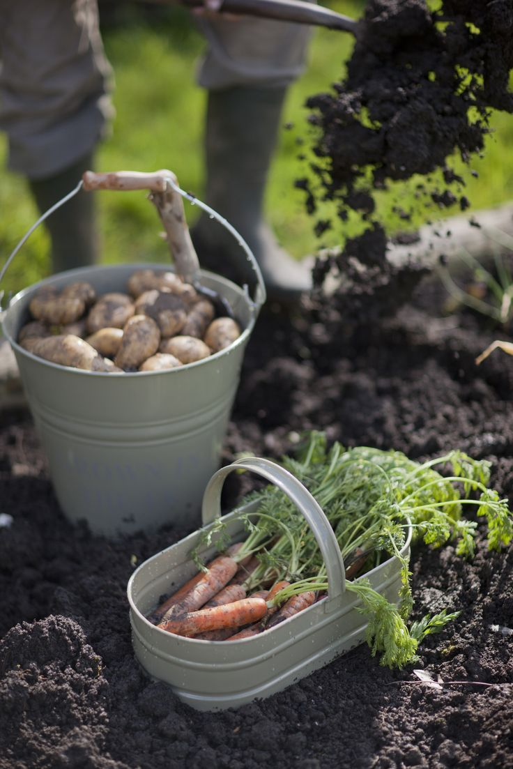Harvest your proudly home grown produce with our traditionally inspired Oval Trug.