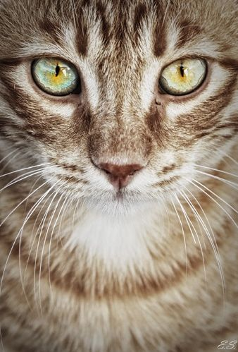 ♔ It's a cats world..................his eyes are deep