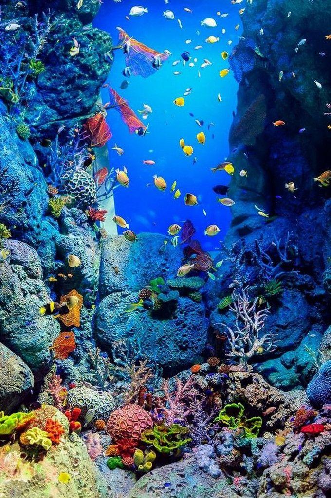 La Beaute Est Partout Dans La Nature 22 Photos Rire En Boite Paysage Sous Marin Fond Aquarium Photos Paysage