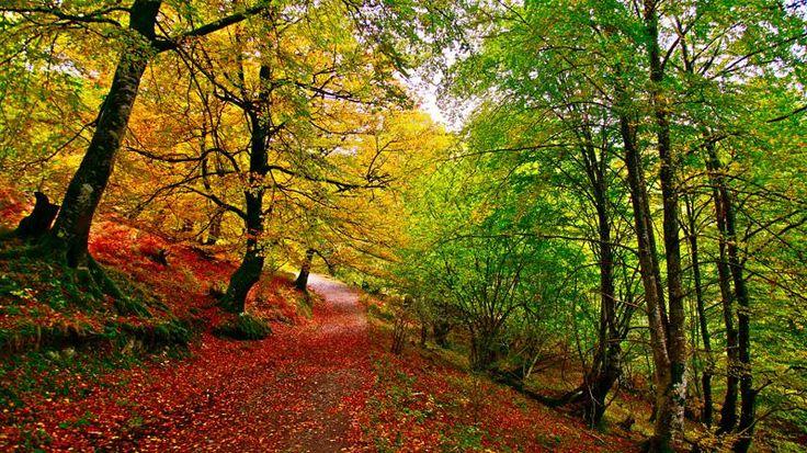 Bosque caducifolio o de frondosas:  Está constituido por árboles altos, con tronco recto y liso, y hoja grande que cae en otoño. Este tipos de bosques consta de pocas especies, la más características son el roble y el haya. En el sotobosque crecen helechos y musgos, en un ambiente sombrío causado por las copas de los árboles.