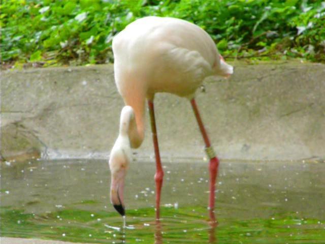El Zoo de Londres, en Regents Park, es el zoo científico más antiguo del mundo. Más detalles en http://www.guirilandia.com/2010/06/08/zoo-de-londres/