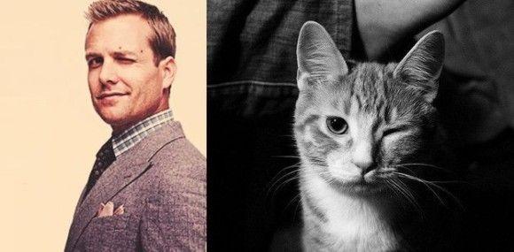 ガブリエル・マクト VS 猫