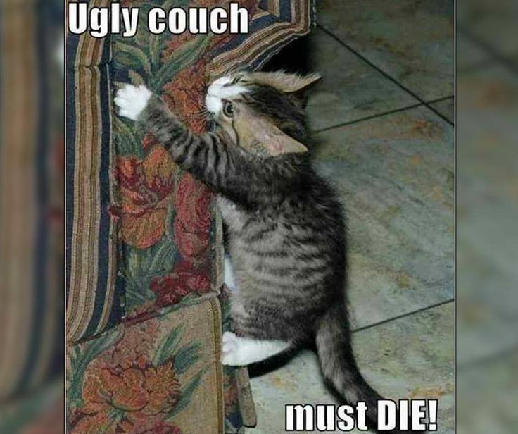 """Ugly couch...must DIE!"" #FridayFunny #VampedFurniture"