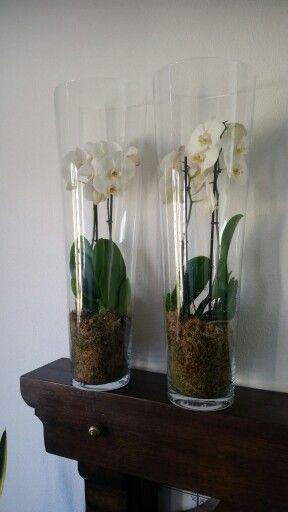 Orchideeën in een hoge vaas. Zo mooi en je hebt er lang plezier van. Wel op een plek laten staan, niet verplaatsen. En 1x in de week een beetje water geven.