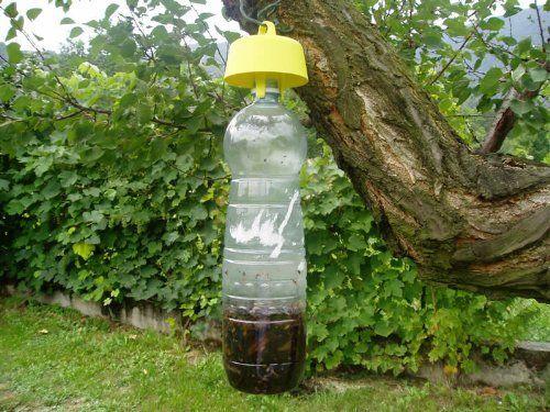L'efficacia di Tap Trap nella lotta contro la mosca olearia