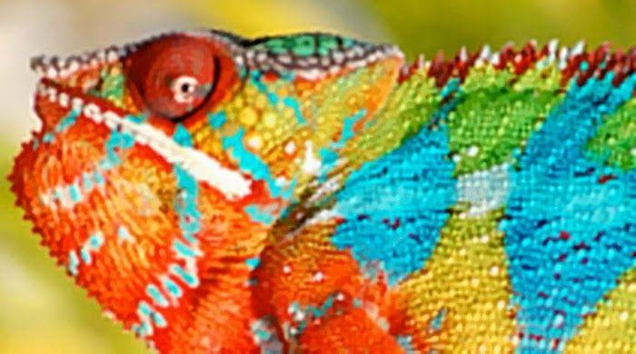 5 Hewan Unik yang Memiliki Warna Terindah di Dunia