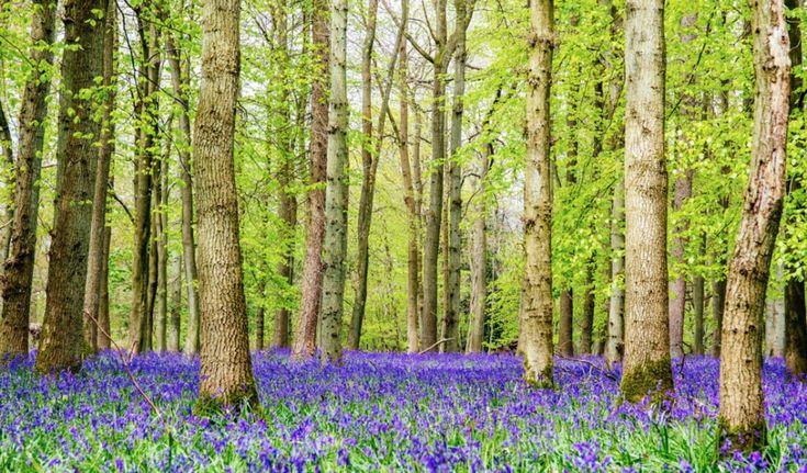 15уголков напланете, где весна особенно прекрасна