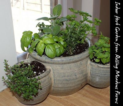 Indoor gardening and diy sprouts gardens nice and green for Indoor vegetable gardening tips