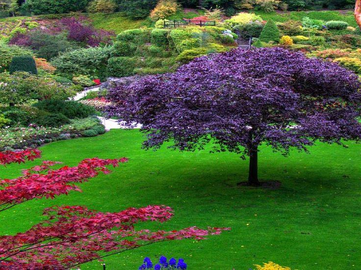 Flower Garden Wallpaper 69 best flower garden images on pinterest | landscapes, nature and