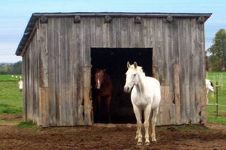 How to Construct a Cheap Horse Shelter (5 Steps)   eHow