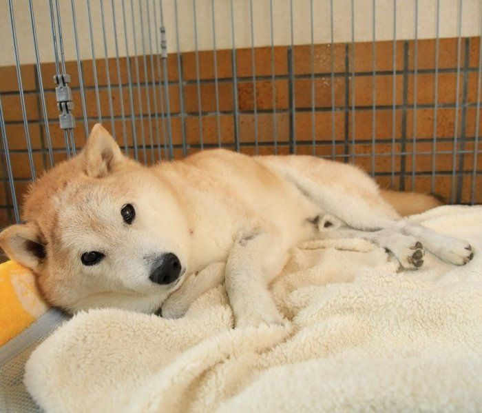 シニア世代の飼い主さんが暮らし始めた犬が 腸の病気にかかり いぬのきもちweb Magazine 犬 愛犬家 いぬ