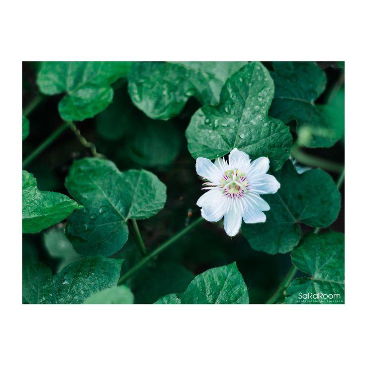 White Flower  #whiteflower #flower #photography #panasonicgx8 #lumixgx8 #hexanon50/1.4 #hobbies