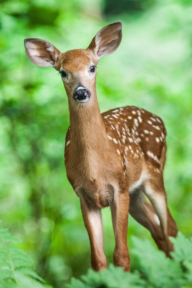 Cute Pics Of Amazing Wild Animals Cute Wild Animals Deer