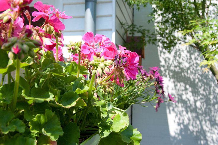 Altankasser pynter op i haven. Her kan alt fyldes i ... kun fantasien sætter grænser.