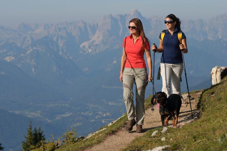 Spazierengang mit Hund, im Hintergrund die Julischen Alpen. Region Villach.