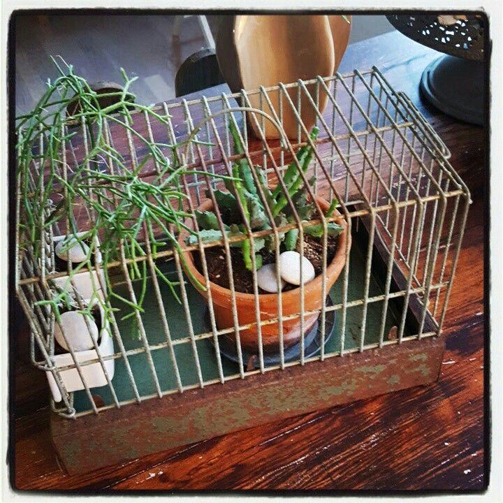 old birdcage ❤