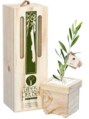Add a touch of the Mediterranean to the garden with an olive tree. An evergreen, olives require full day sun and grow in areas similar to grapes.  Olives can live and fruit for generations. They are frost-hardy and grow to approximately 3m.  Gift contents:  - 36 - 43cm high baby tree in wooden planter containing high quality potting mix.  - Purpose-designed Trees Please gift box made of sustainable untreated plantation pine #clevercreations @The Market NZ