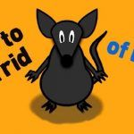 How to get rid of rats fast? Home remedies to treat rat infestation. Ways to avoid rats in house. Get rid of mice naturally. Does borax kill mice fast.