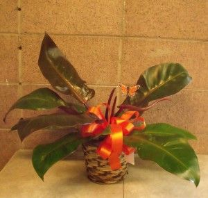 Sympathy plant with Dignity Health Ribbon