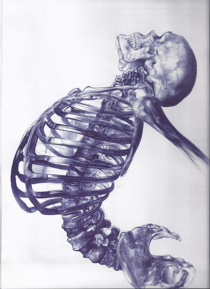 Scheletro umano by ~AndreaSchillaci on deviantART