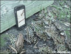 mobil okostelefon animált gif