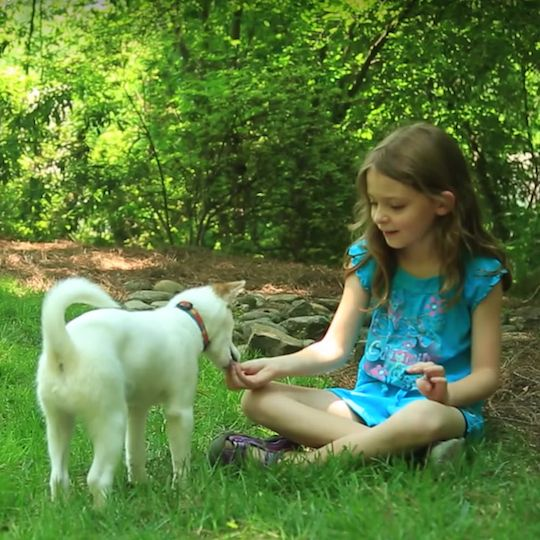 Socializing your puppy to greet a variety of people helps to ensure your puppy is adaptable and confident.