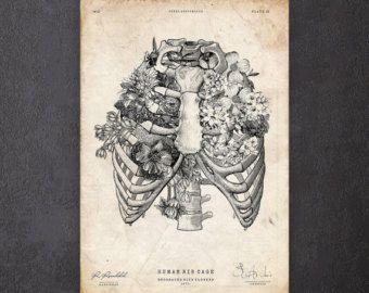Skelet met rozen illustratie  antieke anatomie print