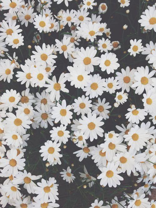 17 Best images about Vingtage Flower on Pinterest | Pink ...
