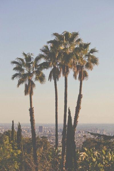 Los Angeles View #inspiration #palmtrees #California
