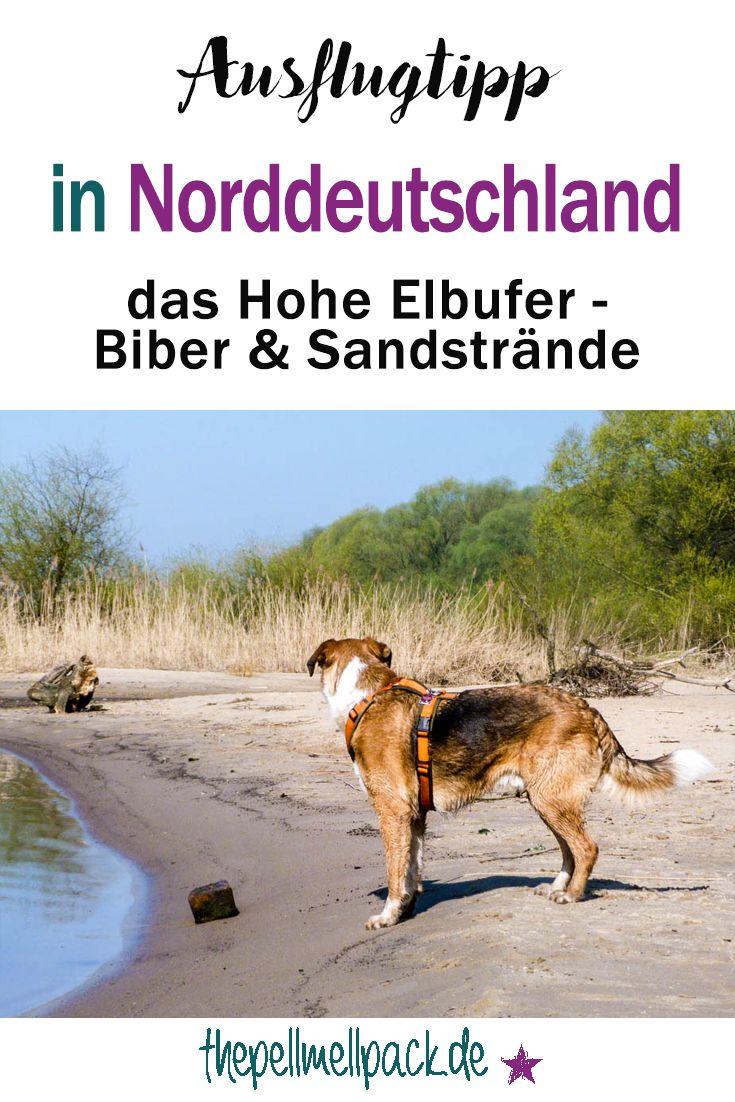 Ausflug mit Hund in Norddeutschland -- Wanderung an der Elbe - wo sich Sandstrände, Auwälder und Biberburgen abwechseln   thepellmellpack.de