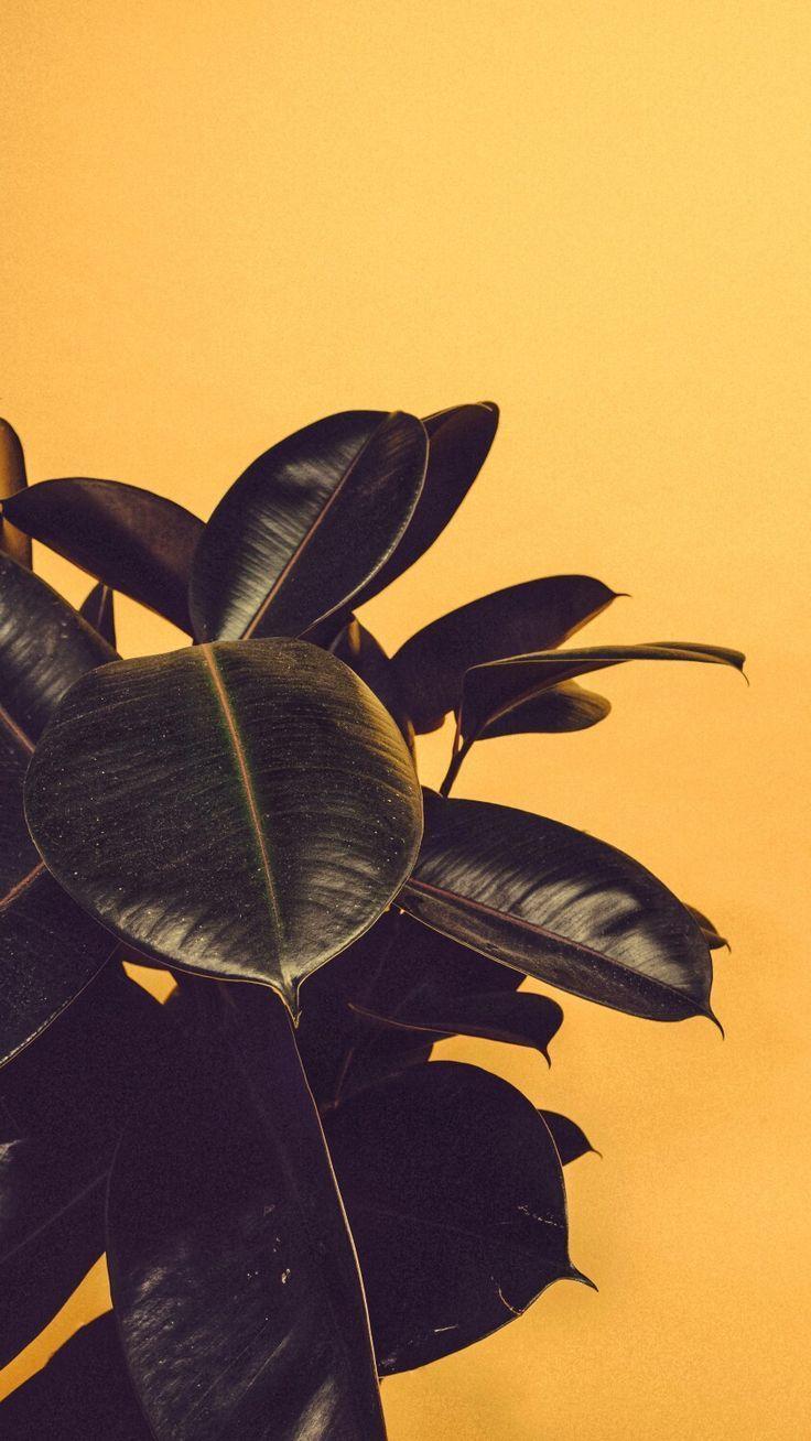 Pappteller Blumen Handwerk zu Gunsten von Kinder – Wallpaper Lockscreen #blumen … – sherlina.faye