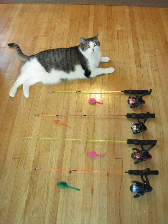 Cat Toy Fish Game : Best interactive cat toys ideas on pinterest chat