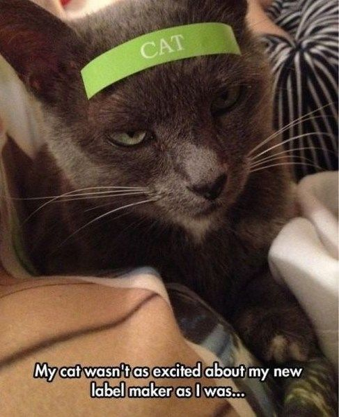 Don't piss off the cat! Why do you constantly have to label things?