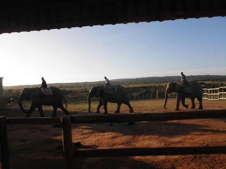 Traveling in South Africa: Kwantu Elephant Sanctuary (near Grahamstown and Port Elizabeth)