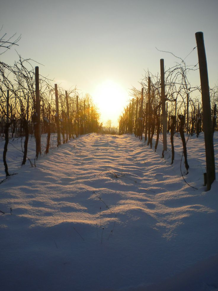 #capriva #collio #brda #fvg #sunset #snow #winter #winelovers