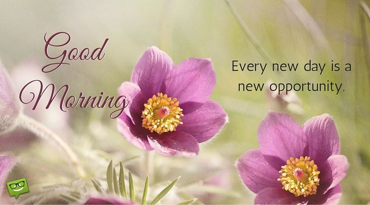 Good Morning Quotes : Good Morning!  #GoodMorningQuotes https://quotesayings.net/wishes/good-morning-quotes/good-morning-quotes-good-morning-68/