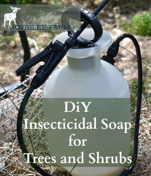 Herbal Insecticidal Soap for Aphids, White Fly, Spider Mites, and Fungal Infections (This post contains affiliate links.) The June garden is actively growing.  The fruit trees have set fruit.  On close examination, though, it appears that something is eating the leaves of the apple trees.  One tree has an aphid invasion.  Another tree has 1 …