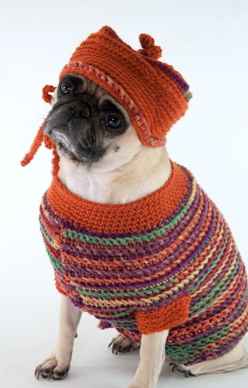 Best Dogs In Jumpers Images On Pinterest Dogs Doggies And - 22 adorable animals wearing miniature sweaters