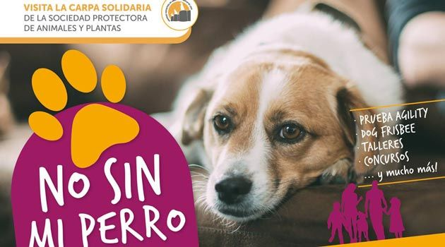 Salón Canino 2017 de Lugo. No sin mi perro. Ocio en Galicia | Ocio en Lugo. Agenda actividades. Cine, conciertos, espectaculos