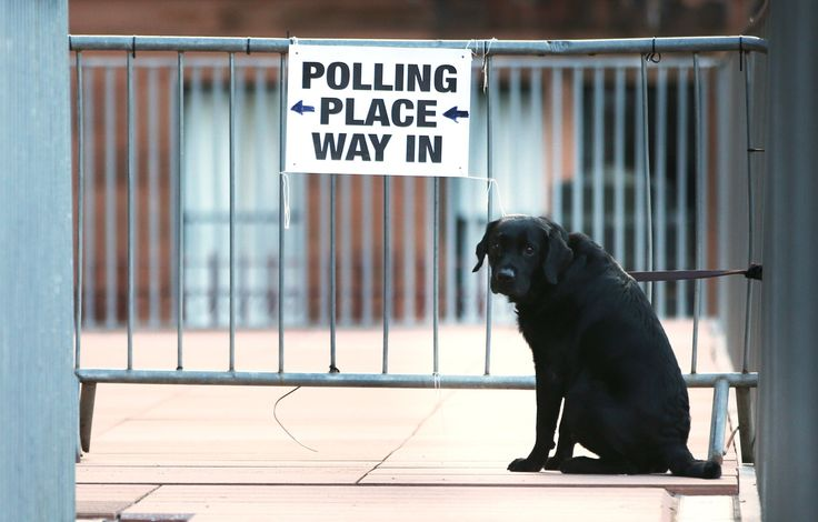 Dogs at polling stations - in pictures