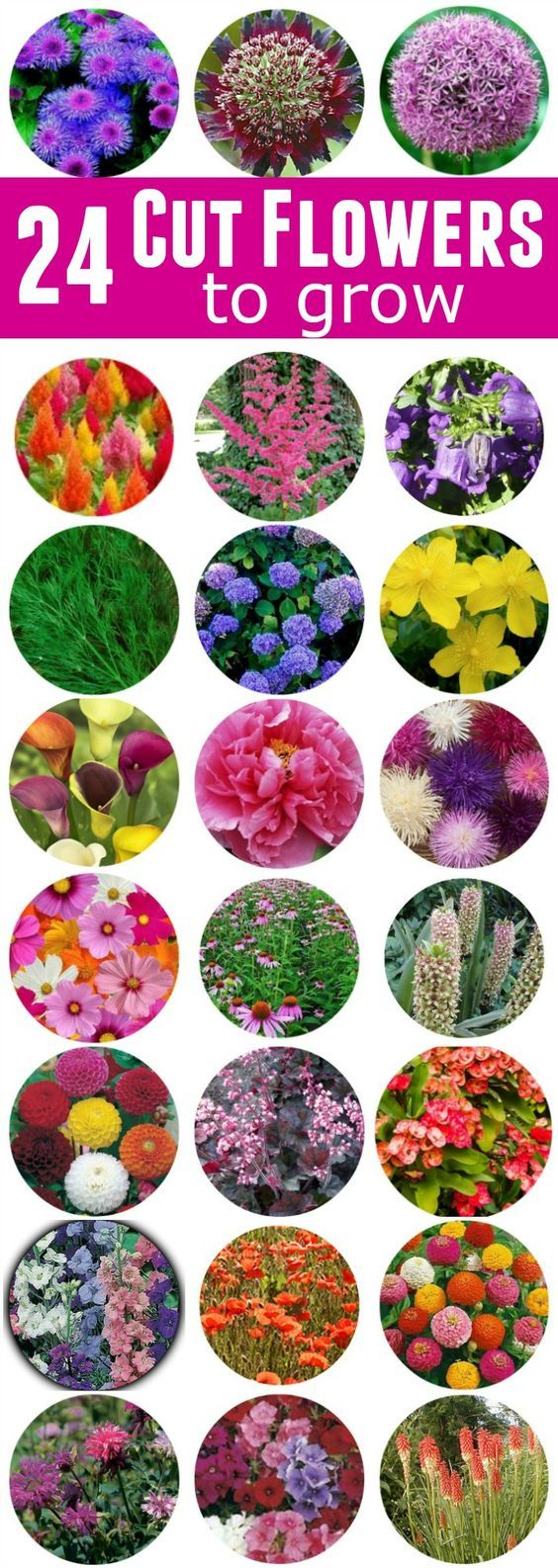 Best 25 Cut flower garden ideas on Pinterest Fall blooming