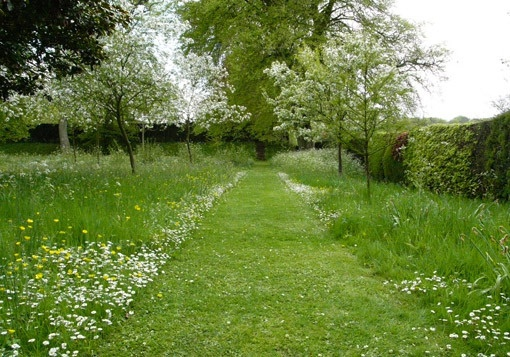 Meadow garden path