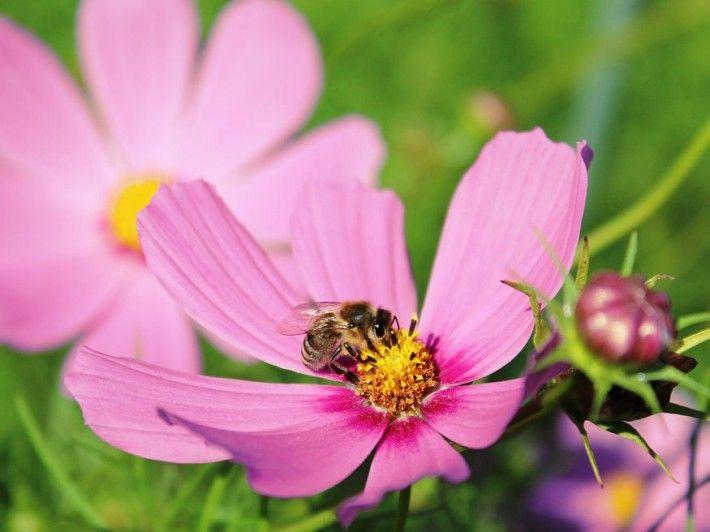 10 magról gyorsan  nevelhető virág