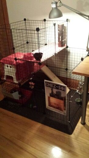 1000 ideas about enclos lapin on pinterest cage rongeur for Enclos lapin interieur