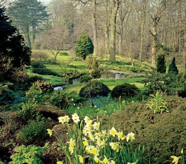 Landscaping Woodland Wa : Curated woodland garden ideas by aimee gardens