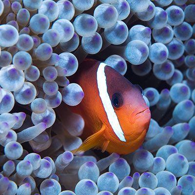 Faites une plongée spectaculaire à la rencontre des plus petits organismes marins sous un dôme en IMAX 3D avec Jean-Michel Cousteau.