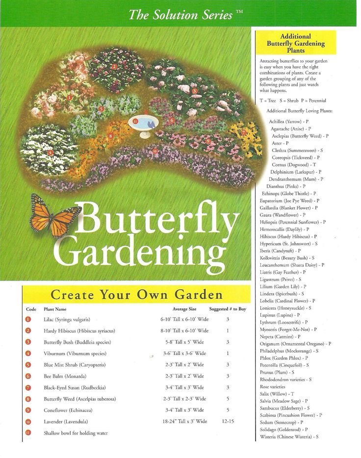 Butterfly Gardening   A List Of Plants That Will Attract Butterflies To The  Garden. Exactly