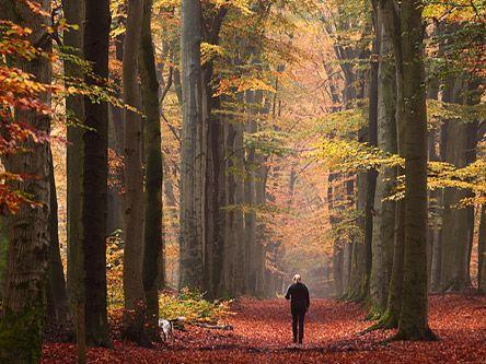 Speuren naar bosgeschiedenis...