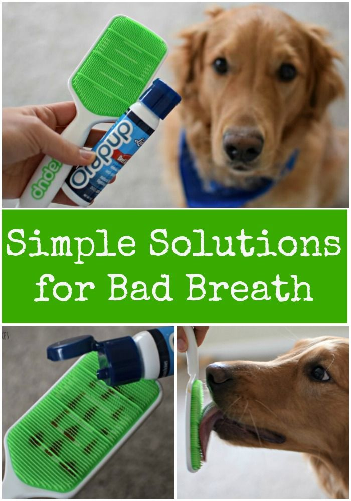 Do you have difficulty brushing your dogs teeth, or do they suffer from bad breath? Check out these easy solutions for a healthier mouth!