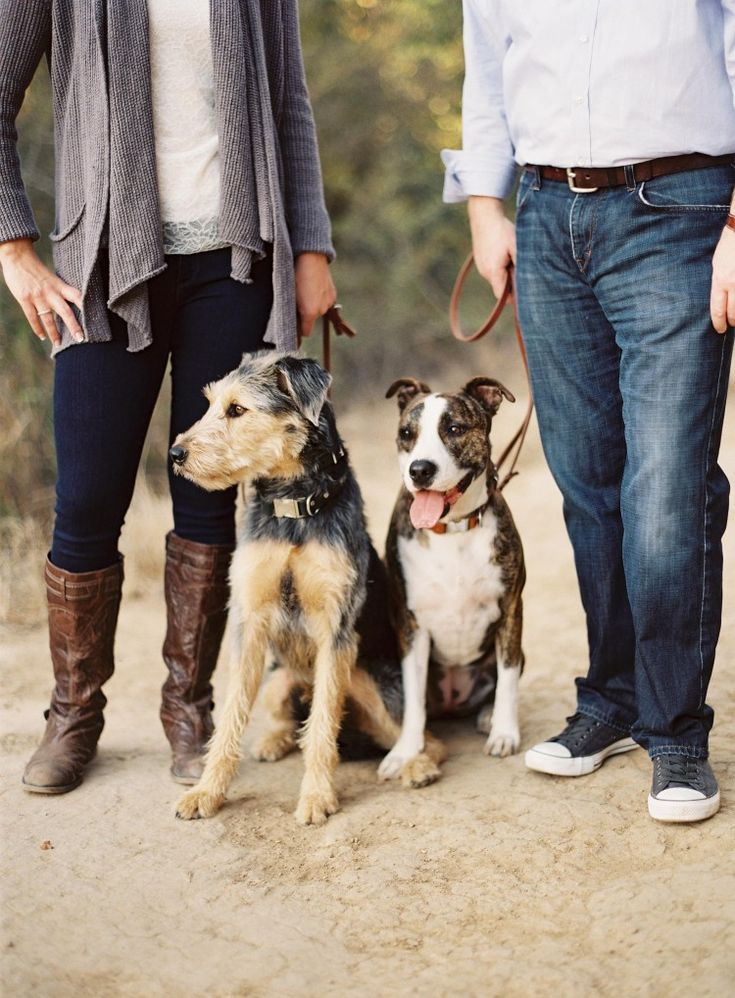 Dog Friendly Parks In Santa Barbara Ca